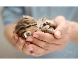 cat, animal, and girl image