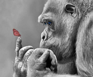 animal, butterfly, and gorilla image
