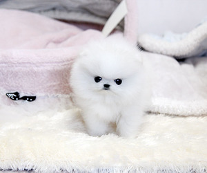 puppies, sweet, and puppi image