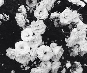 flowers, beautiful, and black and white image