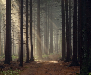 forest, nature, and trees image