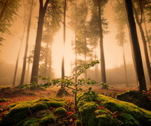 amazing, nature, and trees image
