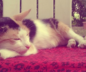 calico, sleep, and cat image