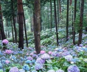 flower and hydrangeas image