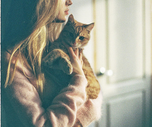 cat, gato, and hipster image