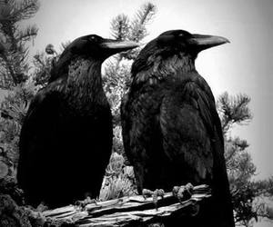 awesome, birds, and crow image