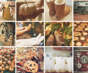 fall, Halloween, and pumpkins image