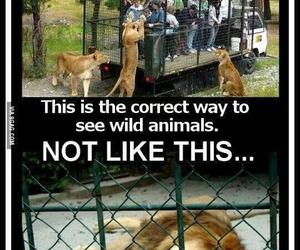 animal, zoo, and wild image