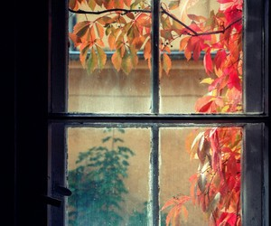 autumn, window, and leaves image
