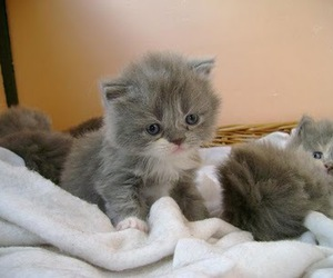 animals, cute, and kittens image