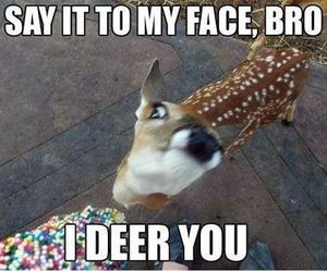 funny, deer, and lol image