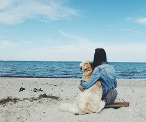 dog, sea, and beach image