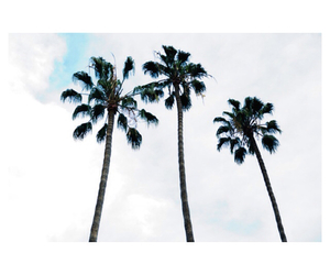 palmtrees, summer, and trees image