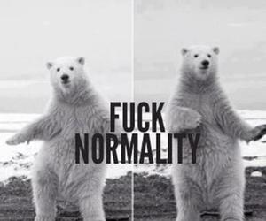 bear, normality, and black and white image