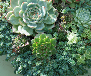 cactus, succulents, and gardening image