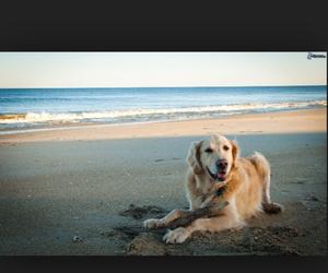 adorable, beach, and boy image