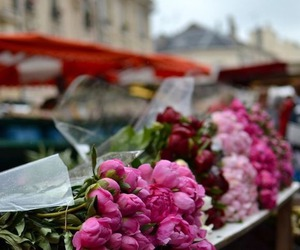 flowers, peonies, and france image