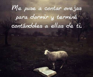 love, sheeps, and frases image