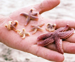 hand and starfish image