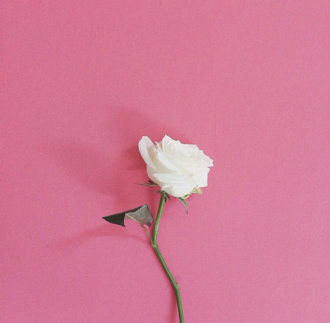 44 Images About Flower On We Heart It See More About Flowers Pink