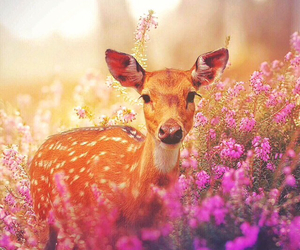 flowers, animal, and cute image