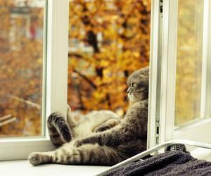 cat, autumn, and window image