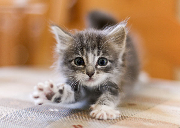 animal, cute, and cat image