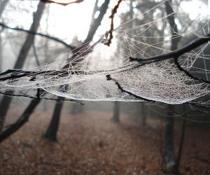grey and spiderweb image