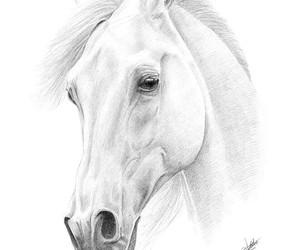 art, horse, and disegni image