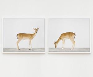 deer, animal, and vintage image