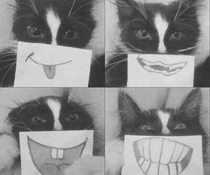 cat, smile, and funny image