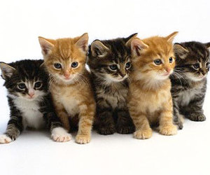 cat, cats, and kittens image