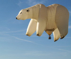 bear, Polar Bear, and balloon image