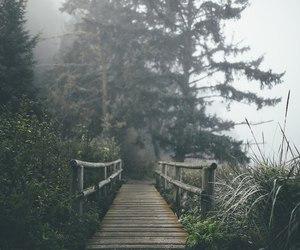 nature, bridge, and fog image