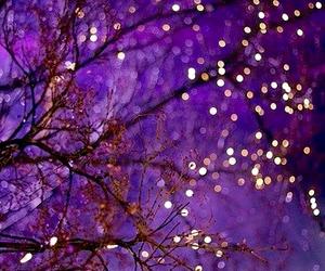 light, purple, and tree image