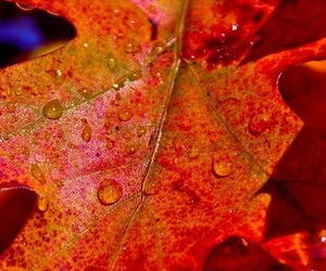 autumn, fall, and water image