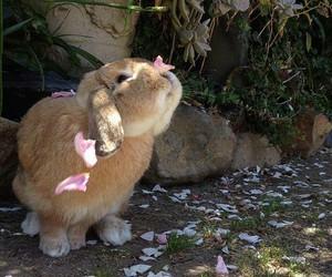 flowers, rabbit, and retina image