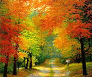 autumn and forest image