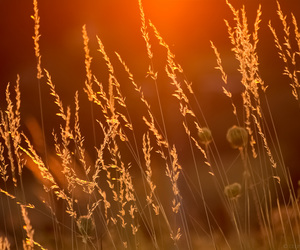 grass, sunset, and wild image
