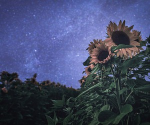flowers, night, and nature image