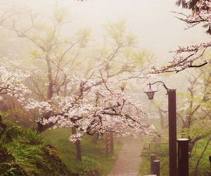 background, cherry blossom, and explore image