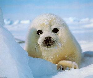 seal, animal, and baby image