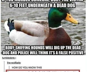 duck, funny, and murder image