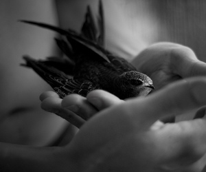 awsome, bird, and black and white image