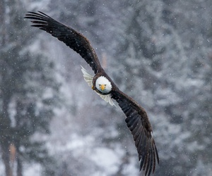 bird, eagle, and winter image