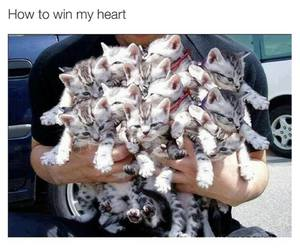 cat, funny, and guy image