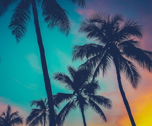 palm trees, colourful, and sky image