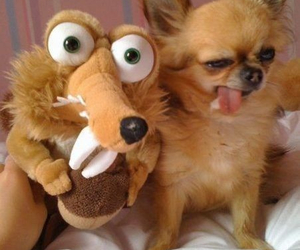 dog, funny, and pet image