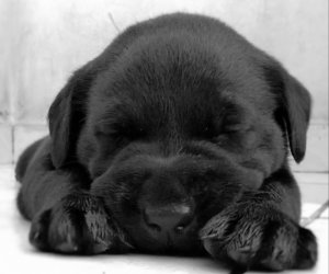 adorable, black and white, and lol image