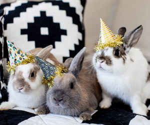 bunny, party, and rabbits image